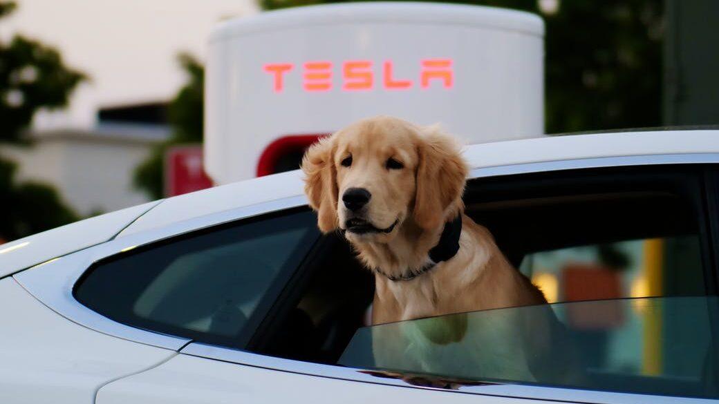 Tesla dog